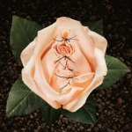 FGM flower