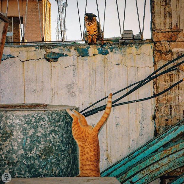 street cat iran